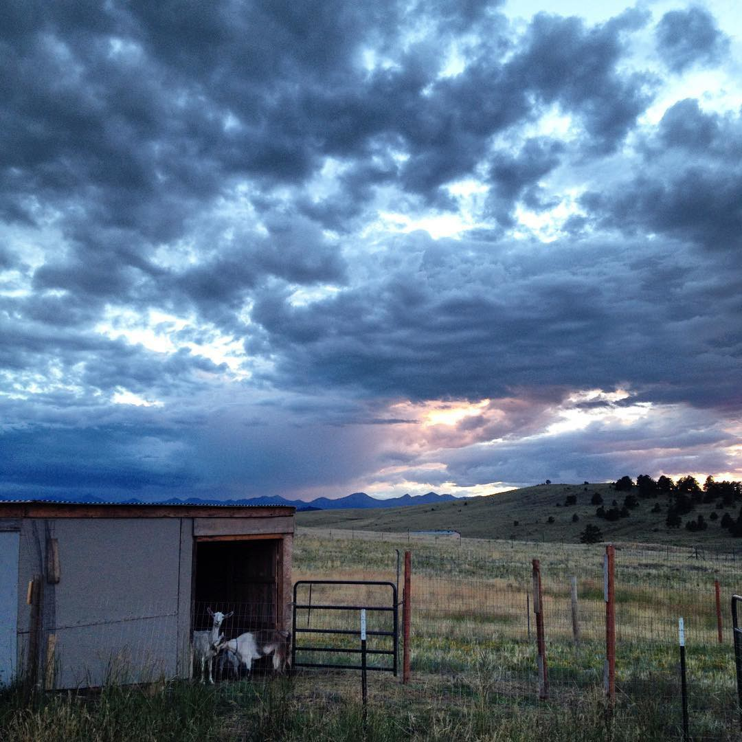 the restoring simple homestead goats